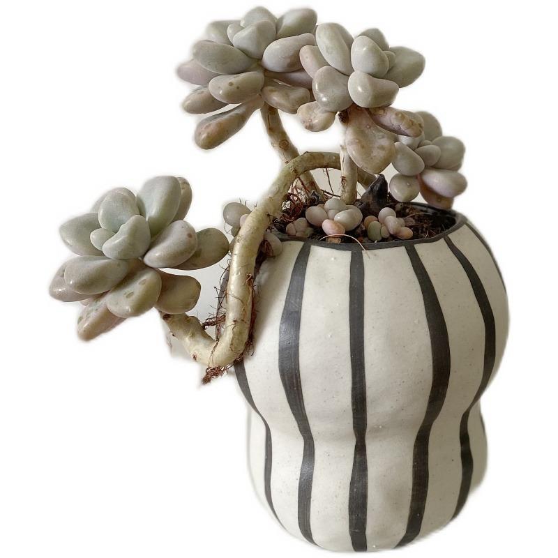 この存在が北欧デザイン●ストライプ フラワーポット 花瓶 バルコニー 多肉植物 盆栽 ポット 植木鉢 インテリア おしゃれ サボテン bb26_画像6
