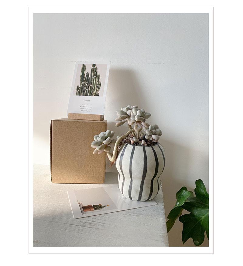 この存在が北欧デザイン●ストライプ フラワーポット 花瓶 バルコニー 多肉植物 盆栽 ポット 植木鉢 インテリア おしゃれ サボテン bb26_画像3