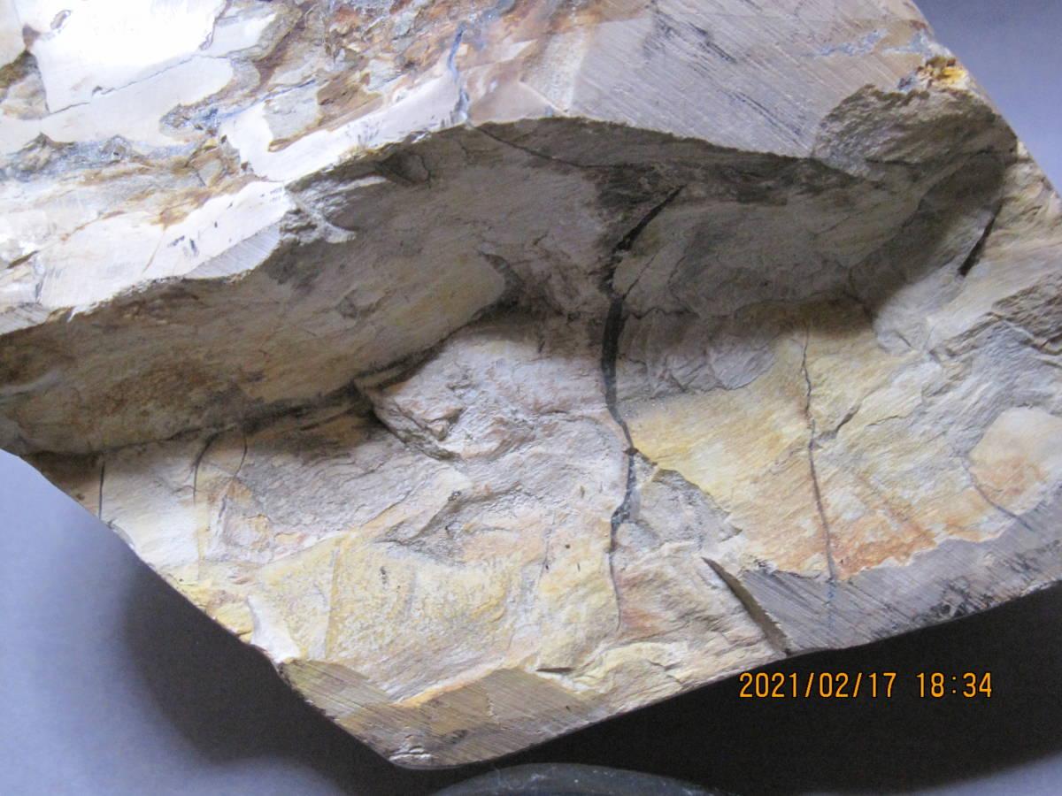 日本産 珪化木 ペトリファイドウッド 化石 置物 3.5Kg(検)アンモナイト 恐竜 隕石 _画像9