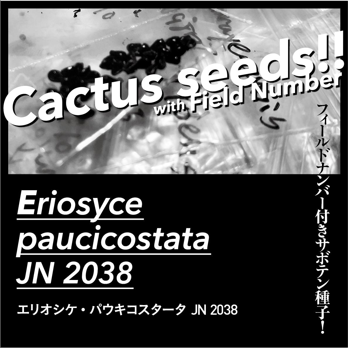 1月着! FN付きサボテン種子 / Eriosyce paucicostata JN 2038 / 20粒 / エリオシケ・パウキコスタータ