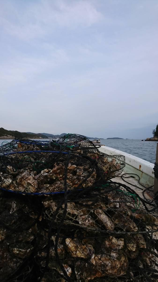 ☆☆BBQに☆☆寿丸の殻付き牡蠣 一斗缶入り 岡山産 1年物!_丸篭に入れて筏に吊っている牡蠣です
