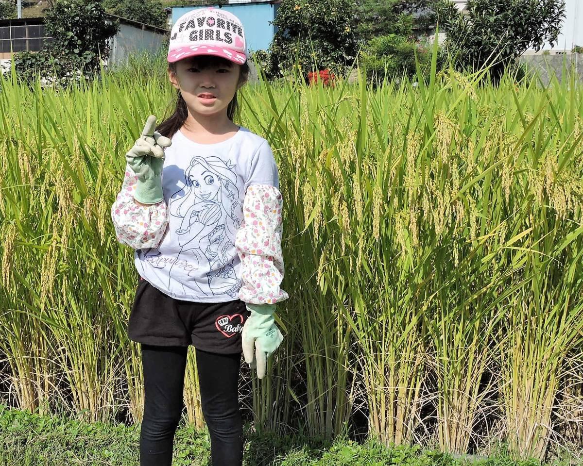 令和2年長野県産 特別栽培米 はざ掛け米 2品種味比べセット【コシヒカリ+いのちの壱】 玄米各5Kg(精米サービス) _画像9