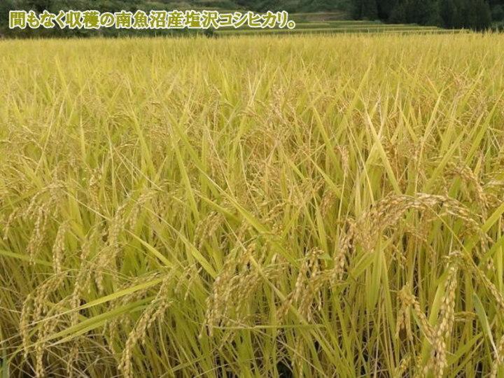南魚沼産コシヒカリ乾式無洗米1kg(ネコポス便)令和2年産_画像10
