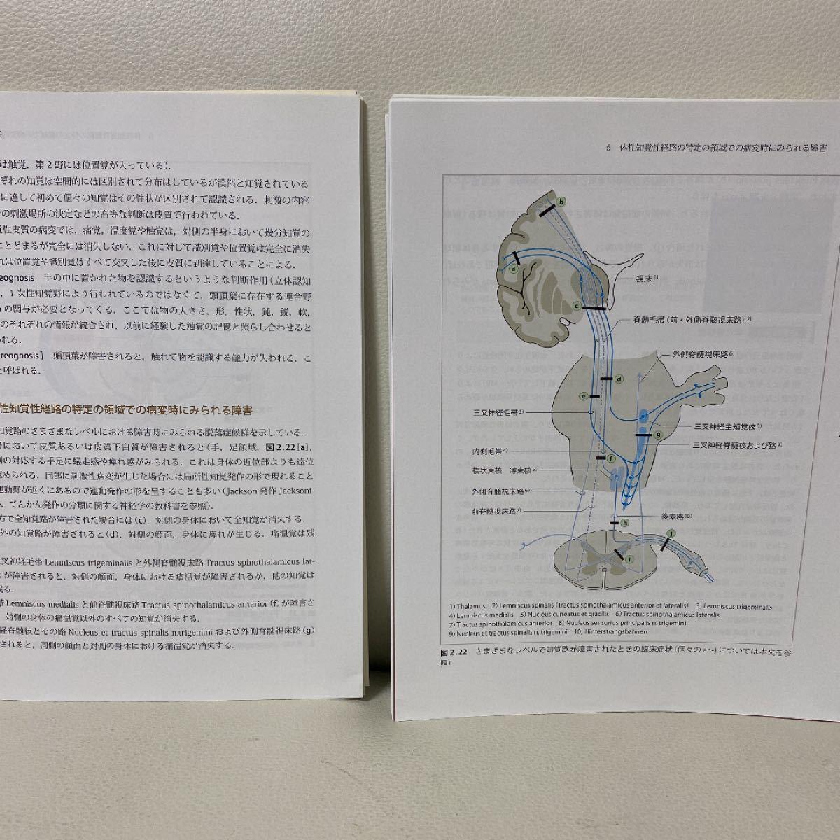 裁断済み 神経局在診断その解剖,生理,臨床改訂第6版