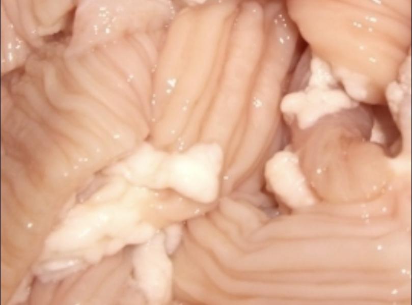 「牛シマ腸 7.0kg」×2ケース 牛ホルモン!!本格焼肉店 業務用 ホルモン テッチャン 冷凍 ホルモン 焼肉 バーベキュー BBQ お店などに◆◆_多くのお客様に支えられての販売事業です。