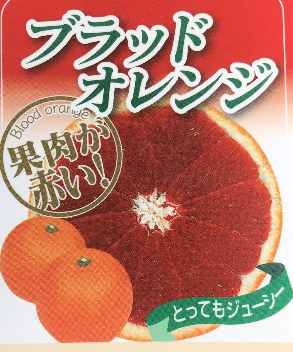 ブラッドオレンジ 果肉が赤いオレンジ苗木_画像1