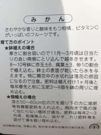 不知火デコポン みかん接木苗木_画像2