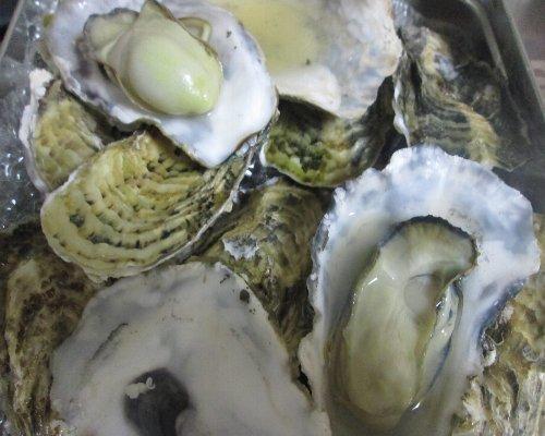 日時指定不可★宮城県産 殻付き牡蠣 5kg訳あり品 殻に割れあり★目安:55個程度★牡蠣 殻付き 牡蠣 殻付 カキ_画像2