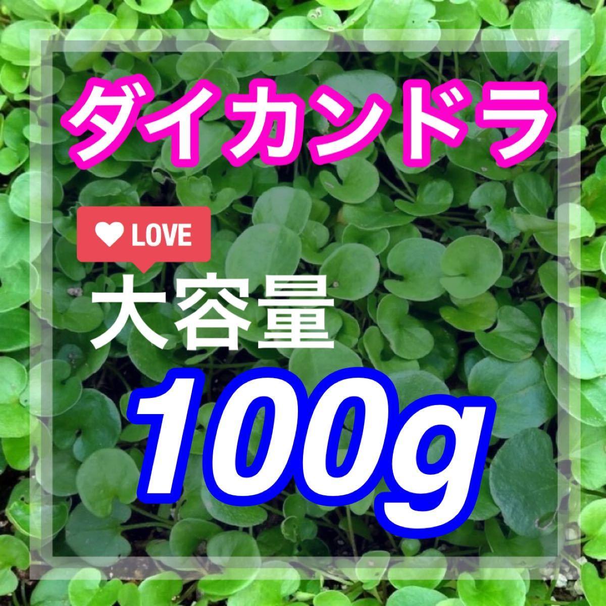 【最安値】ダイカンドラ100g種子<7平米!> 芝生、グランドカバー♪♪
