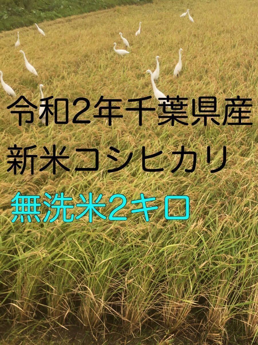 令和2年新米コシヒカリ無洗米2kg _画像1