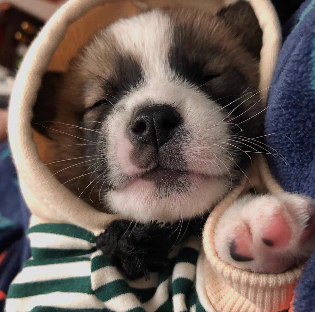 犬 ドッグウェア 春 パーカー フード かわいい S  M 犬用服 犬服