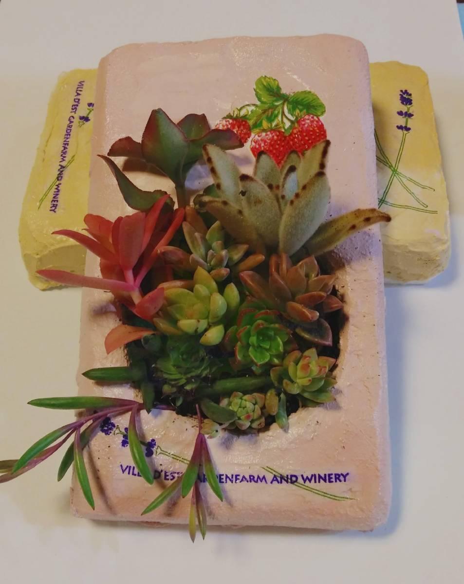231多肉植物の寄せ植え★モルタル造形鉢★壁掛け★タブロー