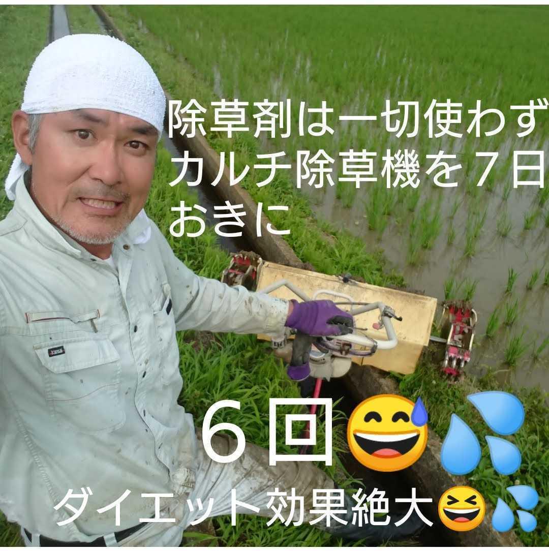 自然栽培お米の旨みたっぷり 氷温熟成米 ひとめぼれ 令和2年産 山形県産 庄内米 玄米 10kg(5kg×2袋) 送料無料_画像7
