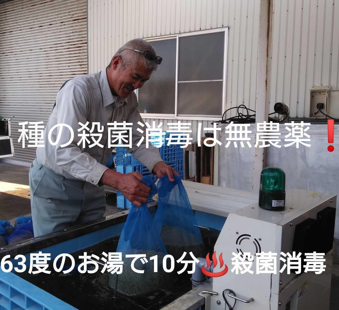自然栽培お米の旨みたっぷり 氷温熟成米 ひとめぼれ 令和2年産 山形県産 庄内米 玄米 10kg(5kg×2袋) 送料無料_画像5