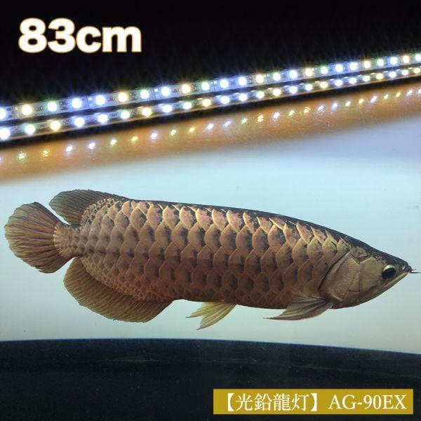光鉛龍灯 アロワナ プレミアムゴールド LED 2列 大型水槽 水中照明 アロワナライト アクアリウム 熱帯魚 金龍 90cm水槽用 でんらい AG-90EX_画像2