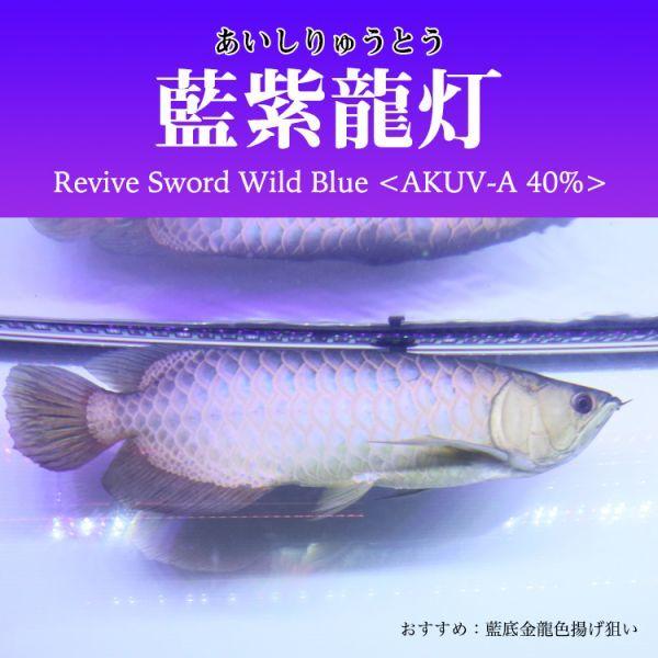 藍紫龍灯 アロワナ LED 2列 UV 紫外線40% ライト 色あせ 色揚げ 大型水槽 水中照明 アクアリウム 藍底 金龍 150cm水槽用 AKUV-150EX_画像6