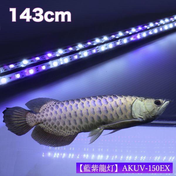 藍紫龍灯 アロワナ LED 2列 UV 紫外線40% ライト 色あせ 色揚げ 大型水槽 水中照明 アクアリウム 藍底 金龍 150cm水槽用 AKUV-150EX_画像2
