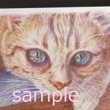 原画★猫 イラスト 色鉛筆 水彩 手描き 作品 ネコ ねこ インテリア ポストカード 絵画 動物_画像2