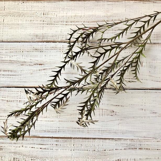 グレビレアアイバンホー 1本 美しいシルエットでそのまま飾れる高品質ドライフラワー 花材 インテリアやスワッグ 撮影小道具などに_画像1