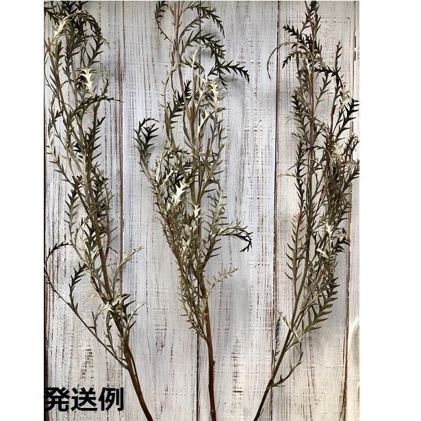 グレビレアアイバンホー 1本 美しいシルエットでそのまま飾れる高品質ドライフラワー 花材 インテリアやスワッグ 撮影小道具などに_画像3