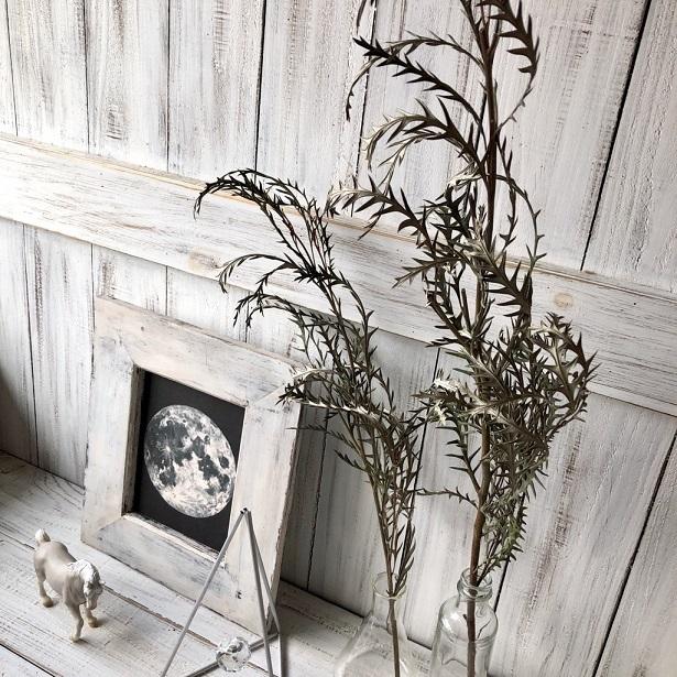 グレビレアアイバンホー 1本 美しいシルエットでそのまま飾れる高品質ドライフラワー 花材 インテリアやスワッグ 撮影小道具などに_画像4