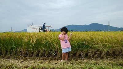 【令和2年産】【新米】 新潟県認証 無農薬 特別栽培米コシヒカリ 白米紙袋25kg_画像2