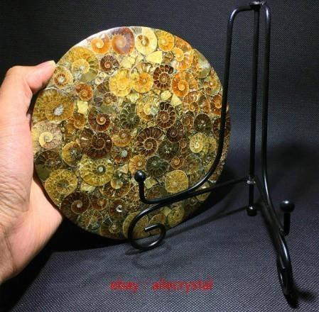 天然 アンモナイト 化石 ヒーリング 趣味 コレクション 標本 ナチュラルアンモナイト コレクション_画像4