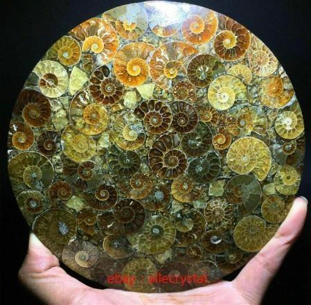 天然 アンモナイト 化石 ヒーリング 趣味 コレクション 標本 ナチュラルアンモナイト コレクション_画像5