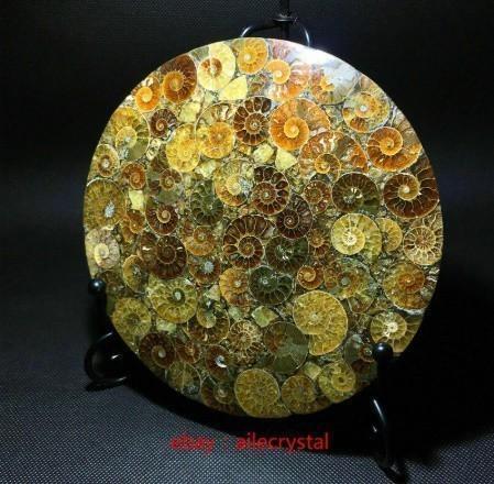 天然 アンモナイト 化石 ヒーリング 趣味 コレクション 標本 ナチュラルアンモナイト コレクション_画像3