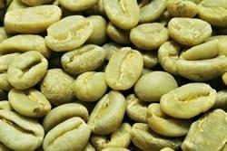 【10㎏】コーヒー生豆 エチオピア シダモG-2 生豆 モカ プレミアムコーヒー こだわりコーヒー カフェ 送料無料_画像1