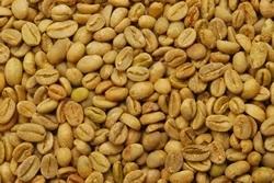 【10㎏】コーヒー生豆 エチオピア イリガチャフG-4ナチュラル モカ スタンダードコーヒー 自家焙煎 カフェ 送料無料_画像2