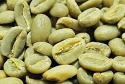 【10㎏】コーヒー生豆 エチオピア イリガチャフ G-2 プレミアムコーヒー 自家焙煎 こだわりコーヒー カフェ 送料無料_画像1