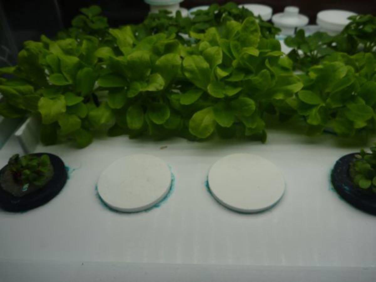 水耕栽培  蓋 フタ 15個 ユーイング グリーンファーム UH-A01E1 Green Farm