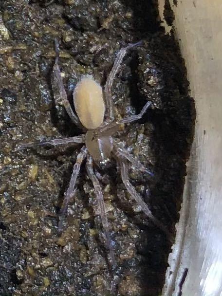 蜘蛛 1匹  ③_画像1