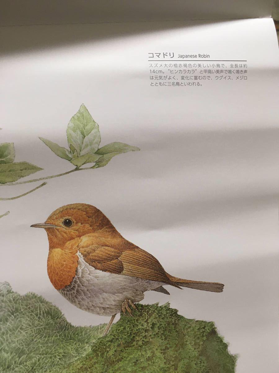 ★2021★鳥の壁掛けカレンダー★スリムで便利!★大安入り★bird★バード_画像5