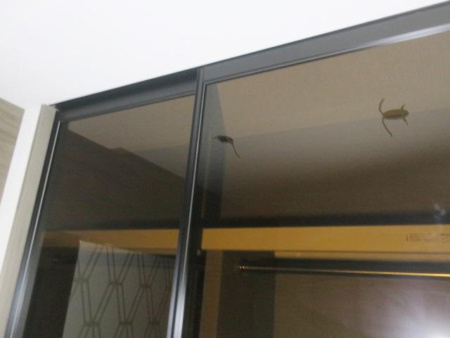 23632■室内用 ガラススライドドア 2枚組 W790×H2390 上部レール付■展示品/取り外し品_画像2
