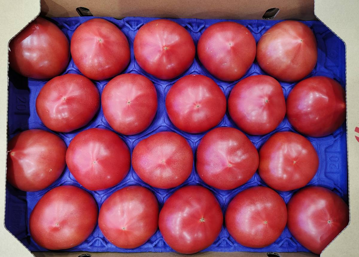 トマト  1cs 20~24玉入_画像1