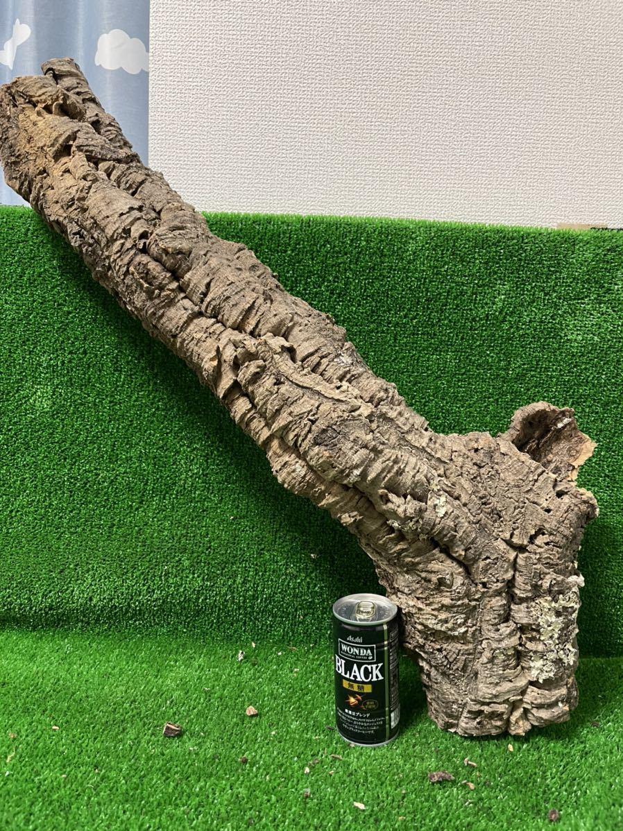 【送料無料】コルク樹皮 70㎝ 1302g キャノン型 3穴タイプ テラリウム 着生 レイアウト ビカクシダ コルク 木 その他多数出品中[R-4]