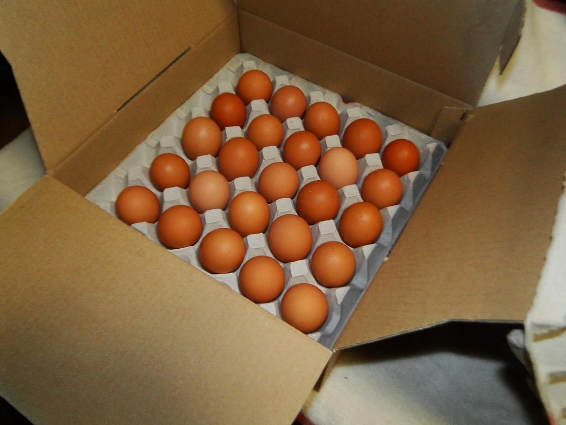 平飼い有精卵50個・自家配合飼料・赤玉鶏(ボリスブラウン)・アニマルウェルフェア準拠_画像2