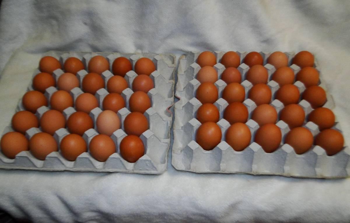平飼い有精卵50個・自家配合飼料・赤玉鶏(ボリスブラウン)・アニマルウェルフェア準拠_画像1
