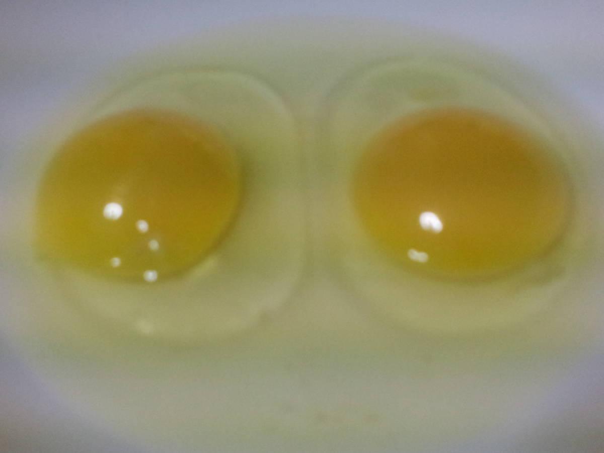 鶏有精卵 10個 + アローカナ有精卵 10個   合計20個     04.20_画像6