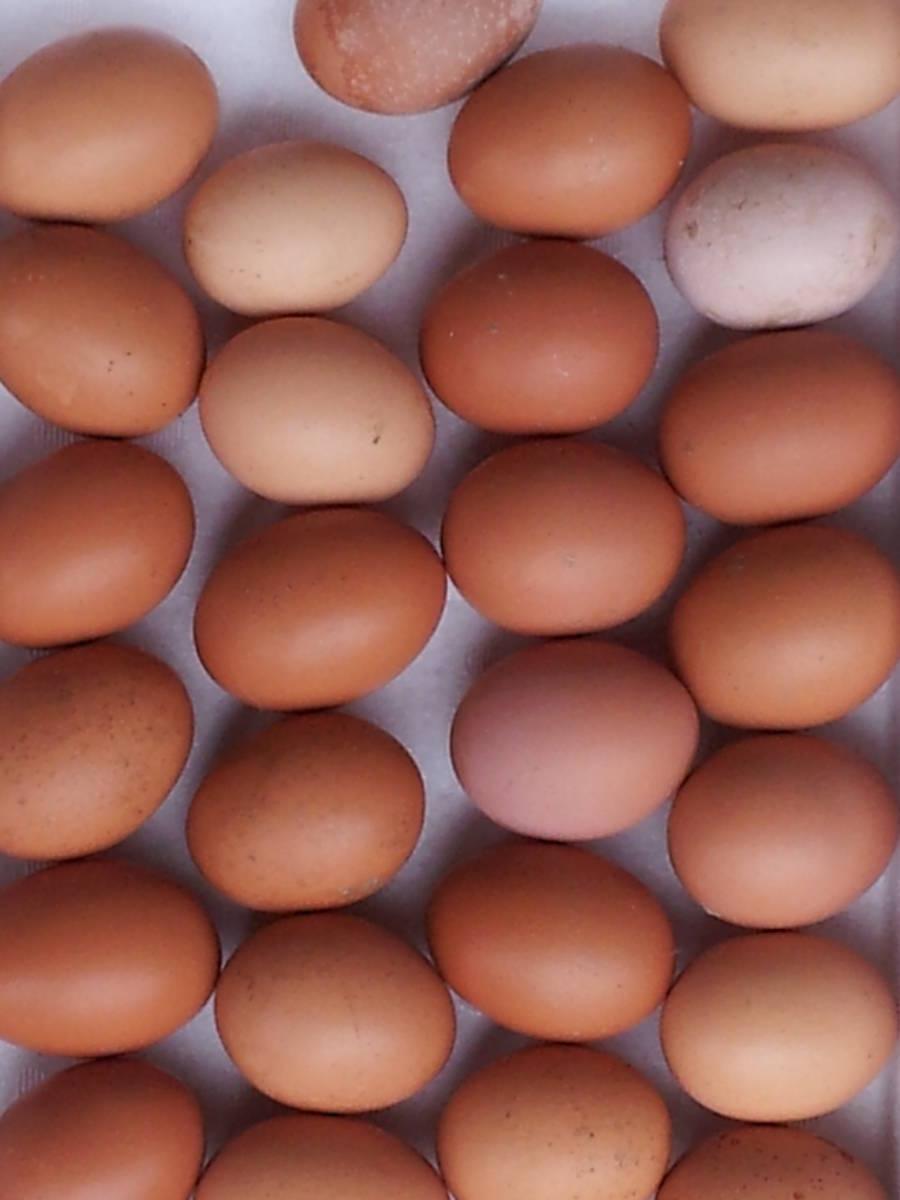 鶏有精卵 10個 + アローカナ有精卵 10個   合計20個     04.20_画像5