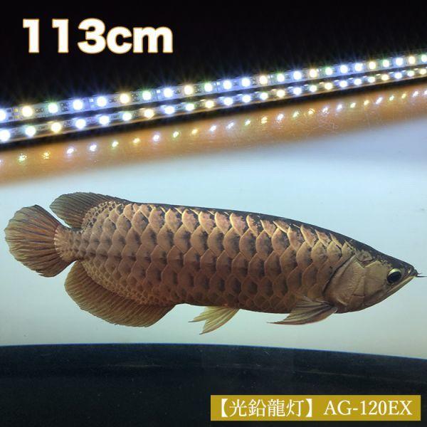 光鉛龍灯 アロワナ プレミアムゴールド LED 2列 大型水槽 水中照明 ライト アクアリウム 熱帯魚 金龍 120cm水槽用 でんらい AG-120EX_画像2