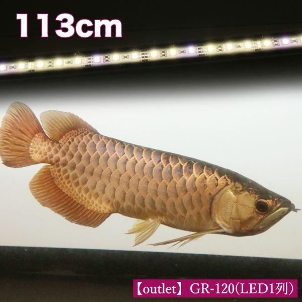 アウトレット 在庫一掃 アロワナ ライト 幻の逸品 ゴールド×レッド 大型水槽 水中照明 LED 1列 熱帯魚 金龍 120cm水槽用 でんらい GR-120_画像2