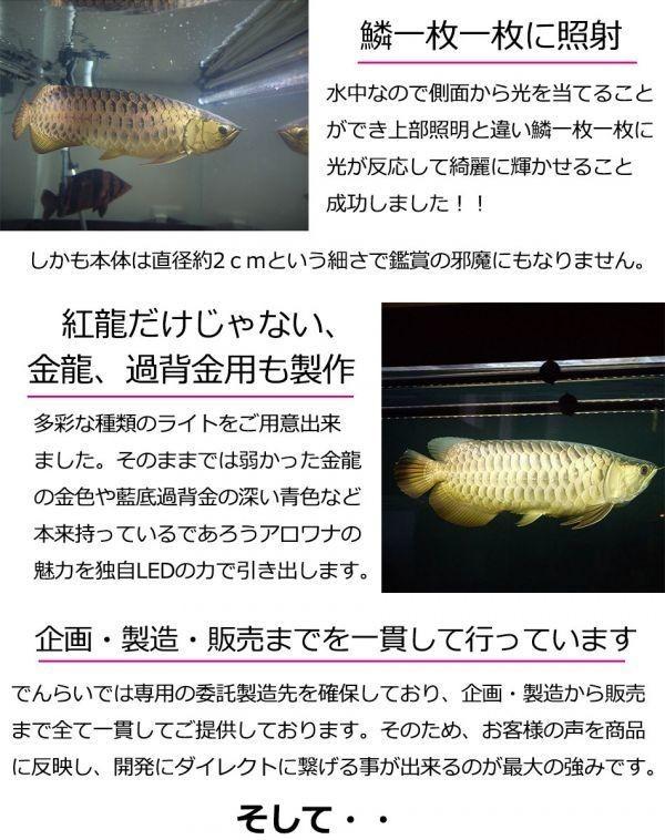 アウトレット 在庫一掃 アロワナ ライト 幻の逸品 ゴールド×レッド 大型水槽 水中照明 LED 1列 熱帯魚 金龍 120cm水槽用 でんらい GR-120_アロワナライトの誕生秘話