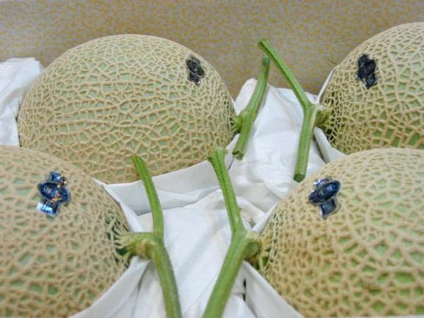 【Good】マスクメロンの王様♪静岡産クラウンメロン 超特大玉4玉 8~9kg