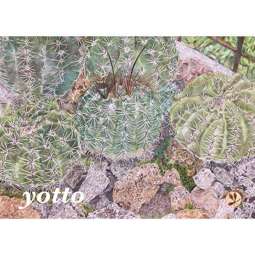 色鉛筆画「 cactus ~ サボテン ~ 」A4・額付き◇◆手描き◇原画◆花◇◆yotto_画像1