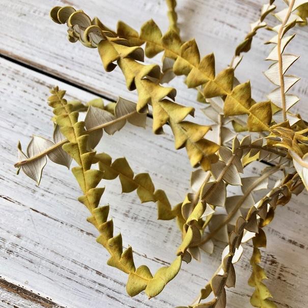 「バンクシアの葉っぱ」カーブ10本セット そのまま飾って可愛いドライフラワー 花材 インテリアやスワッグ 撮影小道具などに_画像2