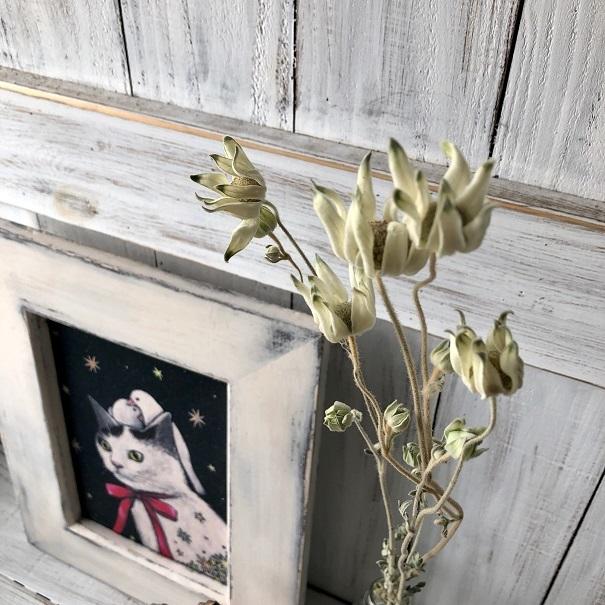 フランネルフラワー ロング50cm 3本セット ドライフラワー花材 ハーバリウム リース スワッグ ボタニカルキャンドルなど 星月猫_画像3