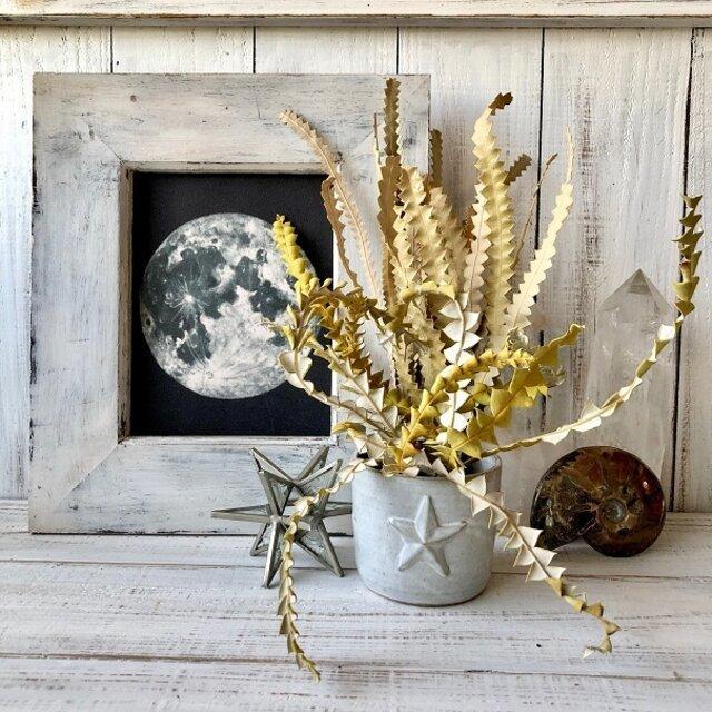 「バンクシアの葉っぱ」細 10本セット そのまま飾って可愛いドライフラワー 花材 インテリアやスワッグ 撮影小道具などに_画像5
